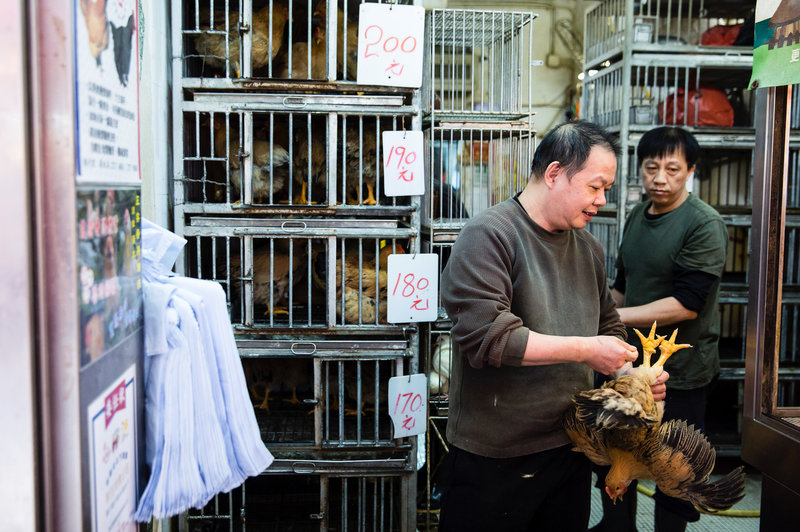 A shop owner holds a live chicken for sale in a Hong Kong market. Isaac Lawrence /AFP/Getty Images